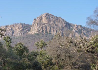 Ranthambhore 4